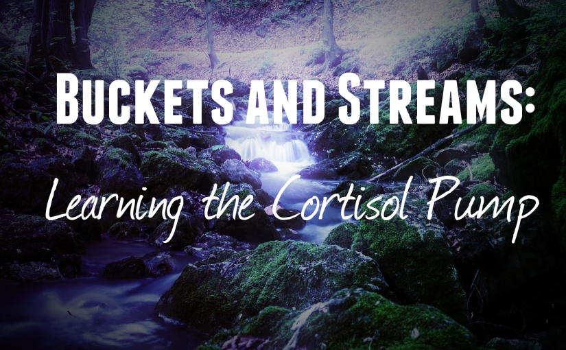Buckets and Streams: Learning the CortisolPump